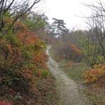 Büdöskúti Arborétum Balatongyörök