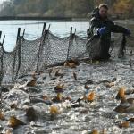 Öreg-tavi Nagy Halászfesztivál 2021 Tata