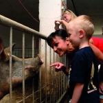 Malac simogatás, farmlátogatás és történelmi kalandpark állatos programokkal a Garabonciás Farmon