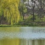 Petőházi Arborétum
