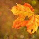 Gyulai őszi szünet a családoknak teljes panzióval a Wellness Hotel Gyula szállodában