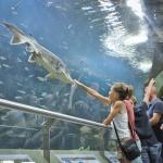 Poroszlói programok 2020. Fesztiválok, rendezvények, események a Tisza-tónál