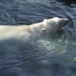 Bécsi állatkerti kirándulás