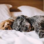Pihenés kutyával Tatán, hétköznapi félpanziós kikapcsolódás kiskedvencével az Öreg-tó Hotelben