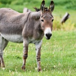 Csacsi simogató farmlátogatás és történelmi kalandpark állatos programokkal a Garabonciás Farmon