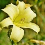 Sárgaliliom tanösvény Velemér, ökotúra az Őrségi Nemzeti Park területén