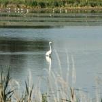 Fertő-Hanság Nemzeti Park Igazgatóság