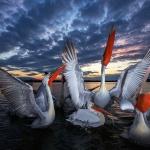Fotókiállítás Varázslatos Magyarország címmel, természetfotók a Magyar Természettudományi Múzeumban