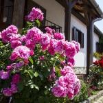 Romantikus nyaralás Móron pároknak és családoknak akciós áron az Öreg Prés Fogadóban
