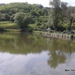 Móri Látóhegyi tavak