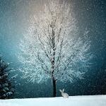 Karácsonyi koncertek 2020. Online jegyvásárlás