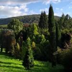 Agostyáni Arborétum látogatás Tatán 2021. Séta a fenyők erdejében