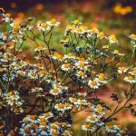 Gyógynövény botanikus kert látogatás