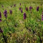 Kiskunsági Nemzeti Park túranaptár 2020
