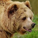 Medveotthon látogatás Veresegyházon