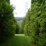 Budakeszi Arborétum látogatás