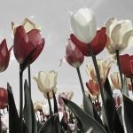 Virághagyma Vásár és Piknik 2020 Szőlősgyörök