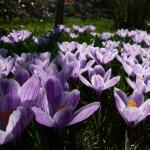 Védett növényritkaságok között Budapesten, látogatás az ELTE Füvészkertben