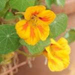 Ismerkedés a Soroksári Botanikus Kert növényvilágával, állatvilágával és gombavilágával