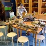 Természetbúvár terem, interaktív program gyerekeknek a Természettudományi Múzeumban