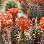 Kaktuszfarm Várong
