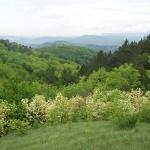 Nagy-Szénás tanösvény Nagykovácsi, ökotúra a Budai-hegységben
