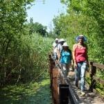 Ős-Dráva tanösvény Szaporcán, kirándulás a Duna-Dráva Nemzeti Parkban