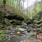 Pro Silva tanösvény Óbánya, ökotúra a Mecsekben, a Duna-Dráva Nemzeti Parkban