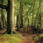 Vén fák tanösvény