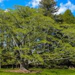 Farkasszigeti Arborétum