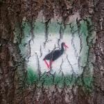 Fekete gólya tanösvény