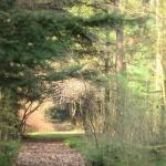 Filmforgatás helyszín a Budakeszi Arborétumban