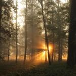 Öregerdő tanösvény