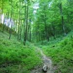 Erdőanyai tanösvény