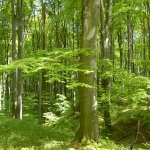SEFAG Zrt. - somogyi erdők