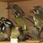 Ingyenes múzeumlátogatás Zircen, az MTM Bakonyi Természettudományi Múzeumában