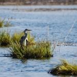 Víz világnapja programok a Kiskunsági Nemzeti Parkban 2021