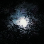 Csillagászati túra 2021. Csillagséták a Kiskunsági Nemzeti Parkba