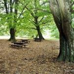 Miklósfai Arborétum