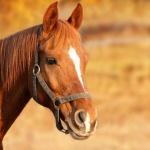 Falusi Olimpia csapatépítő lovas programok szállodánkban a Tisza Balneum Hotelben
