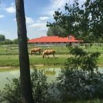 Szilvia Ranch Kaskantyú