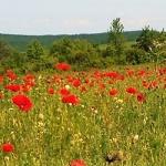 Kazincbarcikai Természetbarát Egyesület túranaptára 2021