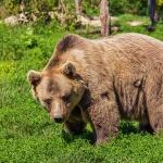Kirándulás a veresegyházi medverezervátumba, Közép-Európa egyetlen medvefarmjára