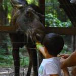 Állatok Világnapja 2021. Látványetetés a Körösvölgyi Állatparkban