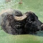 Afrika Múzeum és mini állatkert látogatás a Balatonnál