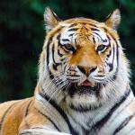 Miskolci Állatkert és Kultúrpark látogatás 2021