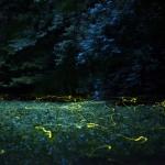 Szentjánosbogár túrák a Duna-Ipoly Nemzeti Parkban 2021