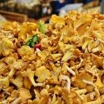 Gombák világa 2021. Gombász nap kicsiknek és nagyoknak a Szegedi Füvészkertben