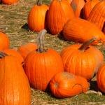 Halloween Kupa programok 2021