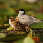Természetfotó kiállítás 2021. A Körösvölgyi Állatpark és Látogatóközpont várja látogatóit